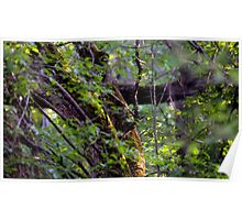 Mossy Tree in the Forest Poster
