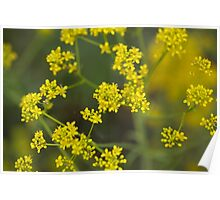 Flowers of woad Poster