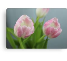 Pretty Pink Tulips Canvas Print