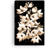 Lilies blooming Canvas Print