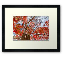 Looking up Lovely leaves..... Framed Print