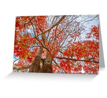 Looking up Lovely leaves..... Greeting Card