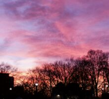 Sunset at Boston Common 3/1/16 Sticker