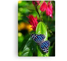 blue wings Canvas Print
