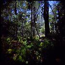 Fraser Forest by mewalsh