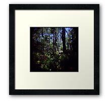 Fraser Forest Framed Print