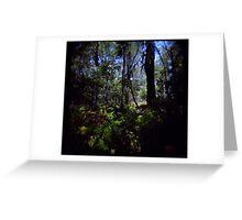 Fraser Forest Greeting Card