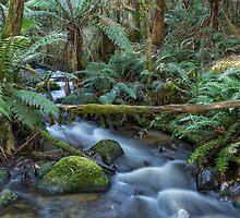 Toorongo River by Dean Osborne