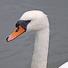 Head of a White Swan by kalaryder