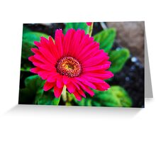 Vibrant Blooms in Pink Greeting Card