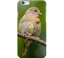 Juvenile American Goldfinch iPhone Case/Skin