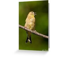 American Goldfinch Singing Greeting Card