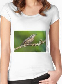Red Breasted Nuthatch in a Tree Women's Fitted Scoop T-Shirt