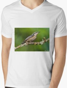 Red Breasted Nuthatch in a Tree Mens V-Neck T-Shirt