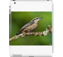 Red Breasted Nuthatch in a Tree iPad Case/Skin