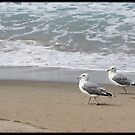 Two gulls by Lynn Starner