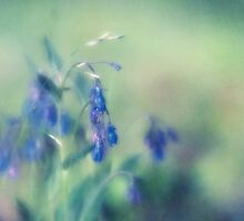 Bluebells by Priska Wettstein