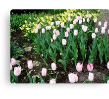 Tulips and Daffodils - Keukenhof Gardens Canvas Print