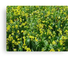 A Riot of Daffodils and Tulips - Keukenhof Gardens Canvas Print