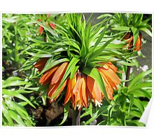 Bad Hair Day - Crown Imperial Poster
