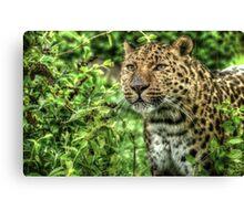 Amur Leopard (3) Canvas Print