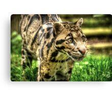 Clouded Leopard (4) Canvas Print