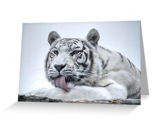 White Bengal Tiger (1) - colour version Greeting Card