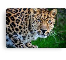 Amur Leopard (4) Canvas Print