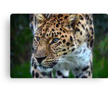 Amur Leopard (6) Canvas Print