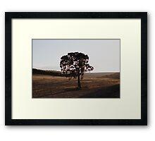 Treelight Framed Print
