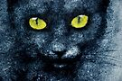 ORION LE CHAT BLEU by Leny .