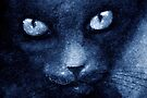 ODESSA LE CHAT BLEU by Leny .