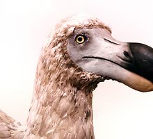 Portrait of a Dodo by Steve