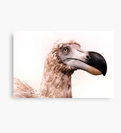 Portrait of a Dodo Canvas Print