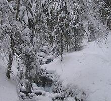 Arosa Frozen Brook by Alius Imago
