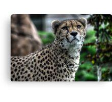 Cheetah (4) Canvas Print
