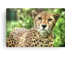 Cheetah (5) Canvas Print