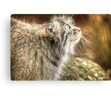 Pallas Cat (3) Canvas Print