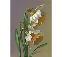 Daffodils - acrylic on canvas Photographic Print