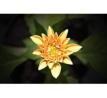 Bright Little Dahlia Photographic Print