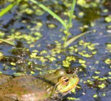 Marsh Frog Sticker