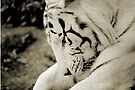 THE WHITE TIGER I by Leny .