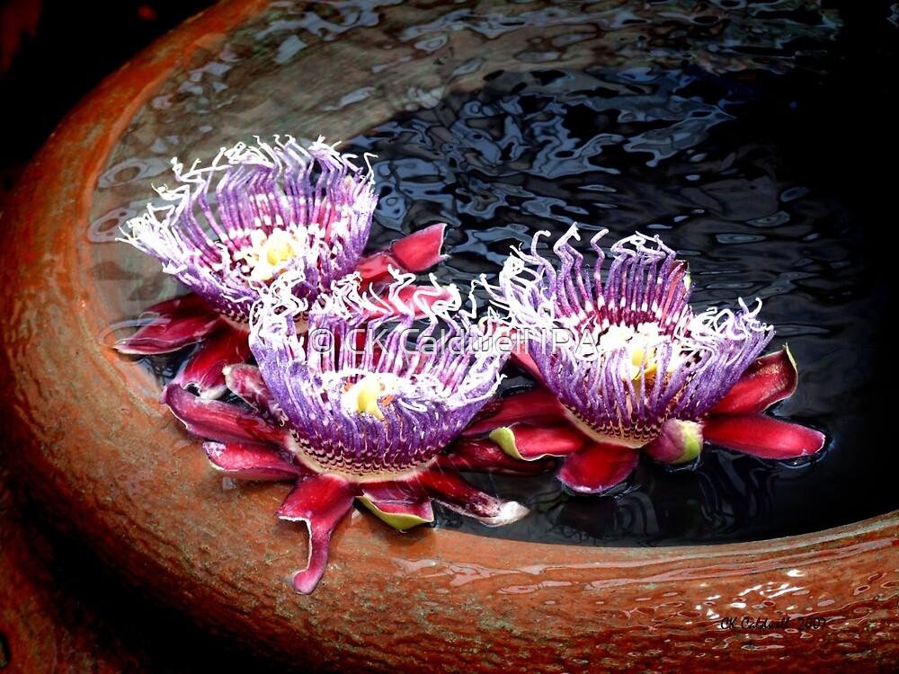 Water Garden by © CK Caldwell IPA