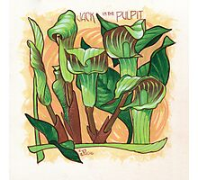 Jack in the Pulpit Photographic Print