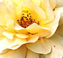 Anna's Pretty Yellow Rose Sticker