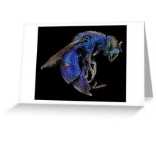 Cuckoo Wasp Guêpe Wasps Arthropode Macro  Greeting Card