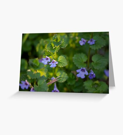 Ground-Ivy Blossoms Greeting Card