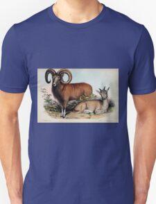 Proceedings of the Zoological Society of London 1848 - 1860 V1 Mammalia 038 T-Shirt