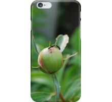 Ants Kissing on a Peony Bud iPhone Case/Skin