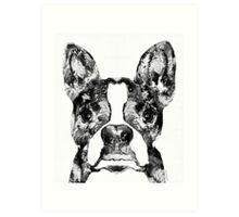 Boston Terrier Dog Black And White Art - Sharon Cummings Art Print